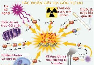 Gốc tự do (chất oxy hóa ) là gì ? Cách chống lại gốc tự do hiệu quả nhất 5
